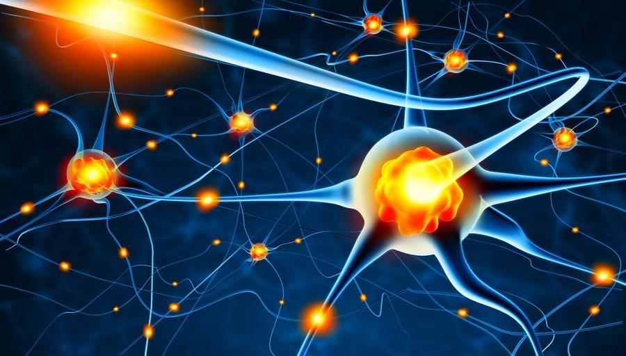 Нервные клетки восстанавливаются. Но не это главное